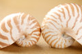 Nautilus shells  in sea sand Royalty Free Stock Photos