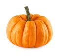 Neat pumpkin on white studio shot of a orange pure background Stock Image