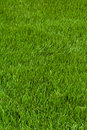 Neatly cut grass Royalty Free Stock Photo
