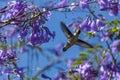 Nectar bird Royalty Free Stock Photo