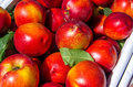 Nectarine close up of a large collection of red Stock Photography