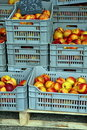 Nectarines Stock Foto