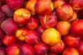 Nectarines full frame take of fresh on a street market stall Royalty Free Stock Image