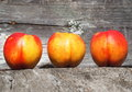 Nectarines ripe sitting on wooden bench in late summer Stock Photography
