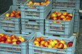 Nectarines some plastic basket with at the market Royalty Free Stock Photography