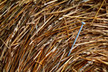 Needle in a haystack 1 Royalty Free Stock Photo