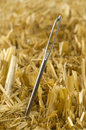 Needle In A Haystack Stock Photos