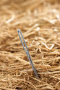 Needle in a haystack finding concept Royalty Free Stock Image