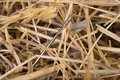 Needle in a haystack lost close up Royalty Free Stock Photos