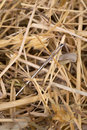 Needle in a haystack lost close up Stock Photos