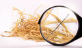 Needle in haystack with magnifying glass on white background Stock Photo