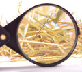 Needle in haystack with magnifying glass on white background Stock Photos