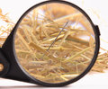Needle in haystack with magnifying glass on white background Royalty Free Stock Image