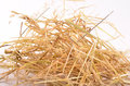 Needle in haystack on white background Stock Images