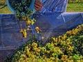 image photo : Grape business