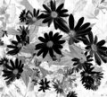 Negative Side Daisy Wallpaper Stock Image