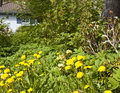Neglected garden Royalty Free Stock Photo