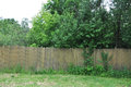 The neglected garden behind the old fence Royalty Free Stock Photo