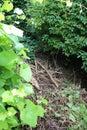 Neglected garden. Royalty Free Stock Photo