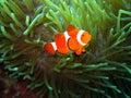 Nemo found Royalty Free Stock Photo