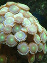 Neon Button Polyps Royalty Free Stock Images