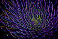 Neon Flares of a Maui-Silversword Royalty Free Stock Photo