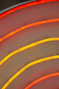Neon tubes Royalty Free Stock Photo