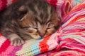 Neonate kitten Royalty Free Stock Photo
