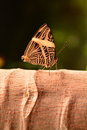 Neotropical mosaic butterfly a lands in the gardens for a visit Stock Photography