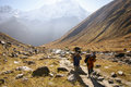 Nepal porters on trail carry goods their heads the way to annapurna base camp through mountain landscape Stock Images