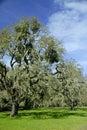 Ner gammal tree för oak Arkivfoton