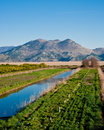 Neretva valley with hills in distance Stock Image