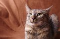 Nervous cat studio shoot Royalty Free Stock Photo