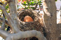 Nest with big egg Royalty Free Stock Images