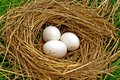 Nest  bird Stock Image