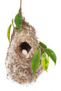 Nest bird isolated on white background Royalty Free Stock Photography