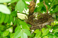 Nest bird in a tree Royalty Free Stock Photography
