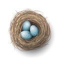 Nest with blue eggs on white background, illustration Royalty Free Stock Photo