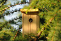 Nest box on larch tree little for tomtit the bird watching out of the Stock Images