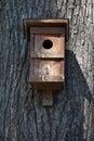 Nest box on a tree Royalty Free Stock Photo