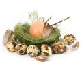 Nest with Easter quail eggs Stock Photography