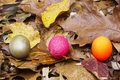 Nest Egg Choices Royalty Free Stock Image