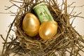 Nest eggs Royalty Free Stock Photo