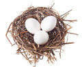 Nest with eggs Royalty Free Stock Photography