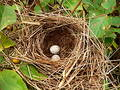 Nest Eggs Stock Image