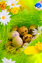Nest with eggs aming flowers Royalty Free Stock Image