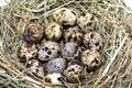 A nest with eggs closeup Royalty Free Stock Photo