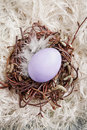 Nest With lavender Egg Stock Images