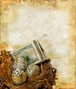 Nest with Money on a Grunge Background Royalty Free Stock Image