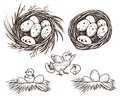 Nest set and hatching chicken. Vector drawing.